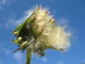 Wandel Entwicklung Blume