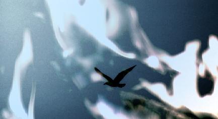 Leben im Werden und Sein: Bild eines großen Vogels im Flug. Er fliegt durch ein Bild des Feuers.