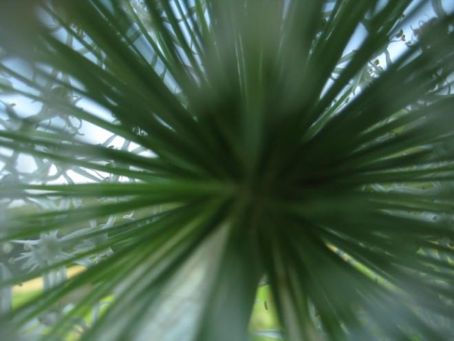 Tiefer Blick in die Komplexität der Natur
