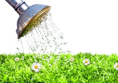 Fotocredit: Fotolia - Bild einer Blumenwiese, die mit einer Gießkanne gewässert wird.